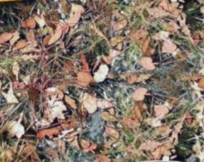 Bladeren en Planten