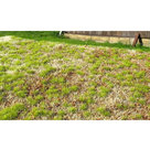 AMMO MIG Grass Mats Spring Steppe (8353)