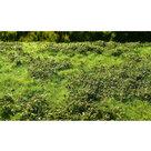 AMMO MIG Grass Mats Small Bushes Spring (8360)