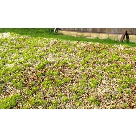 AMMO Grass Mats Spring Steppe (8353)